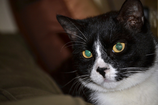 c cat 8365