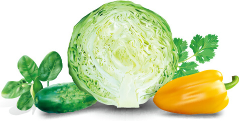 cabbage with peppers and cucumbers vector