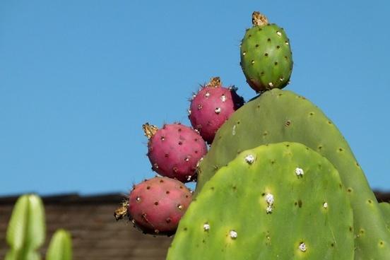 cactus bloom plant