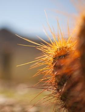 cactus close up plant spike