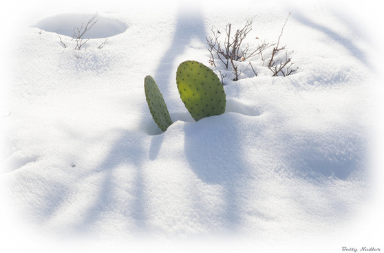 cactus shadow and snow