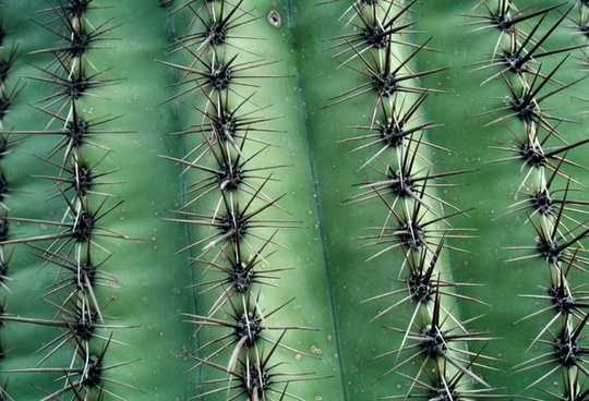 cactus texture green