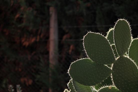 cactus thorns desert