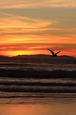 california sunset on new year039s eve