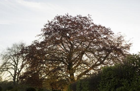 cambridge tree sun