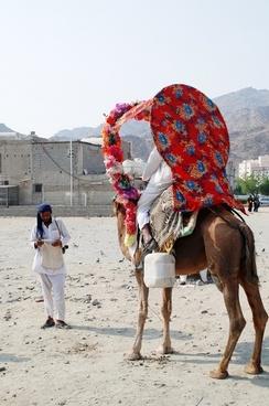 camel animal face