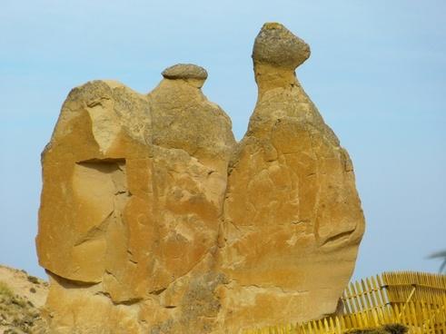 camel cappadocia tufa