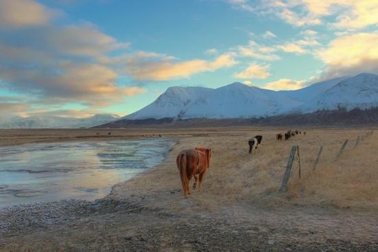 camel desert dry evening lake landscape mammal