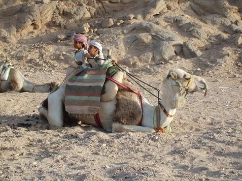 camel desert mountain