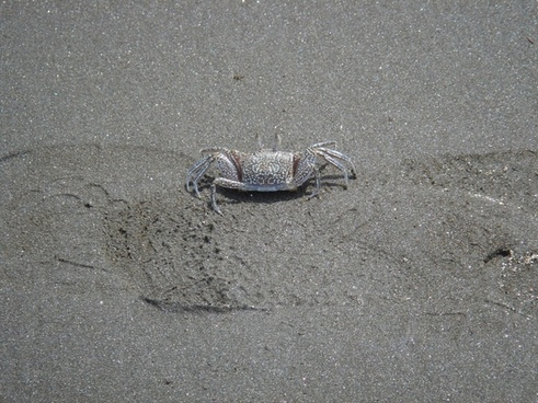 cancer beach pet armor