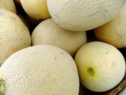 cantalope melons fruit