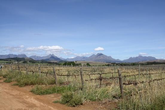 cape town vineyards landscape