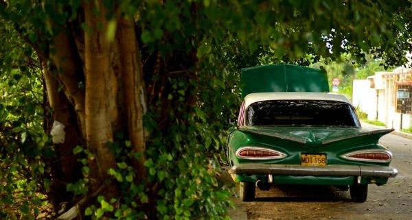 car daytime forest grass leaves light motor vehicle