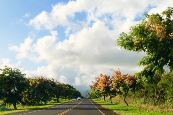 car on road lined with blooming trees