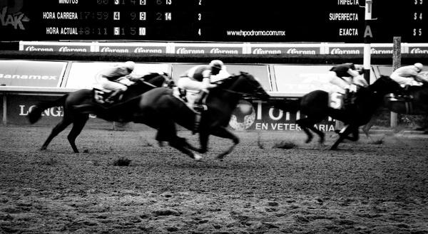 career horses racecourse