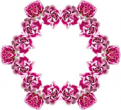 carnations frame