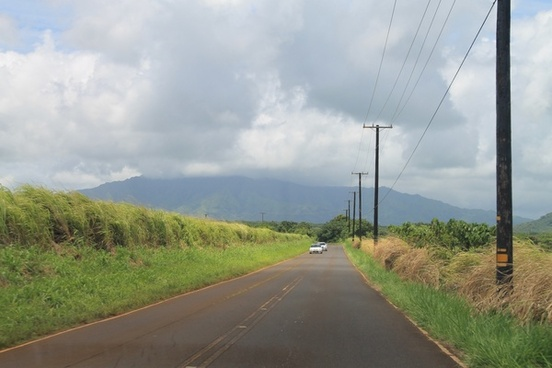 cars on road through tropical fields