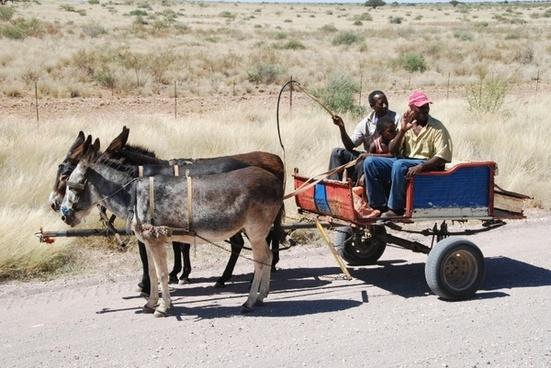 cart donkey cart ass