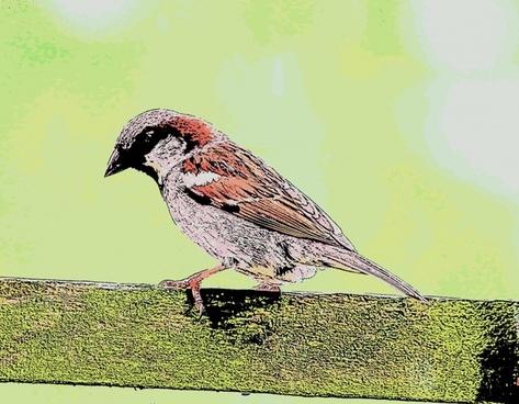 cartoon sparrow