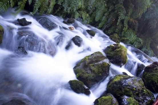 cascade clean daytime environment flow forest moss