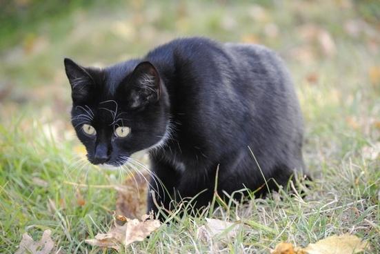 cat animal mousehunt (film)