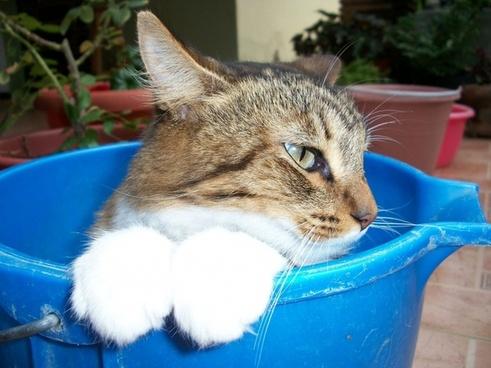 cat bucket stripes