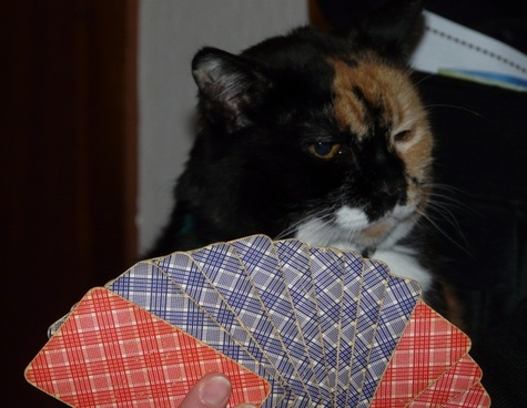 cat cards play