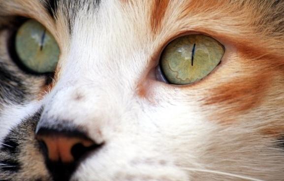 cat closeup eyes