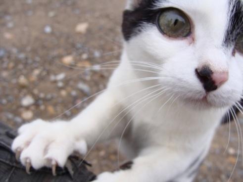 cat curious yonblo