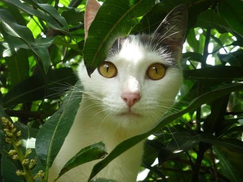 cat domestic tree