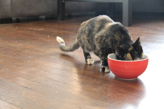 cat eating from red bowl