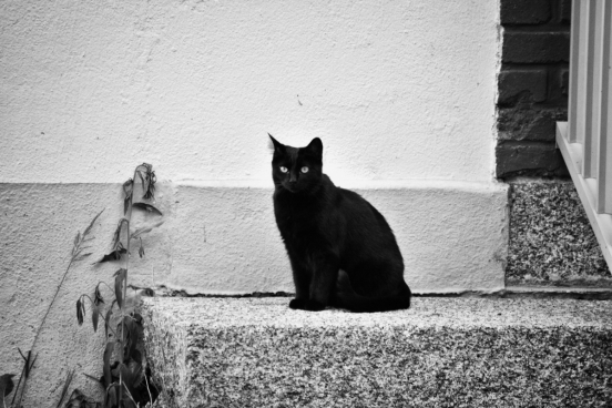 black white photo of black cat