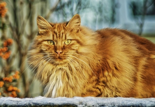 cat feline cat face
