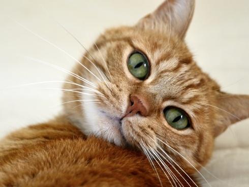 cat feline cat's eye