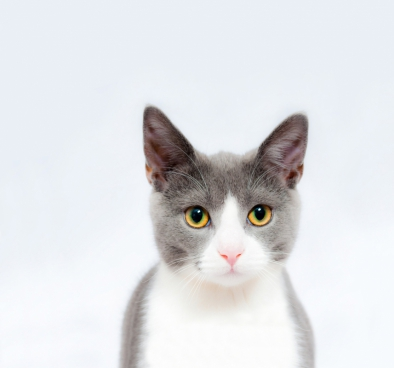 cute innocent grey cat