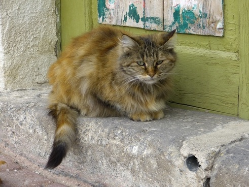 cat fluffy cuddly