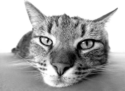 cat hangover relax
