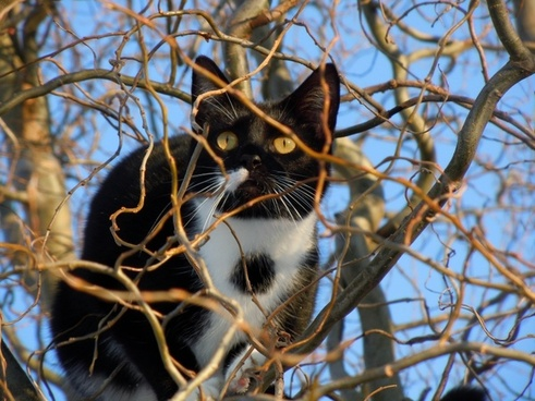 cat hidden animal