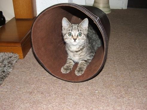 cat kitten young