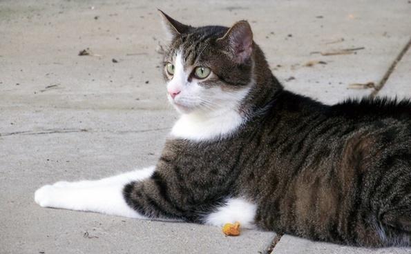 cat outside sidewalk