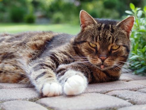 cute cat resting on ground