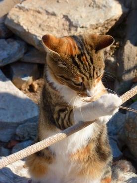 cat play creature