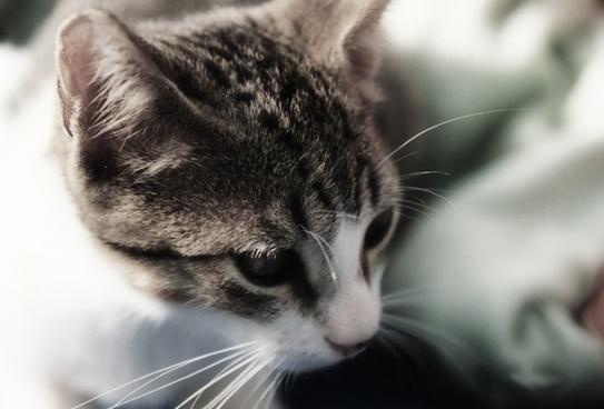 cat portrait head