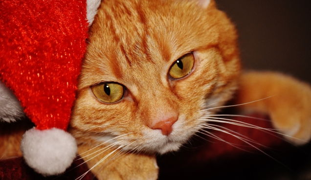 cute yellow cat wearing christmas hat