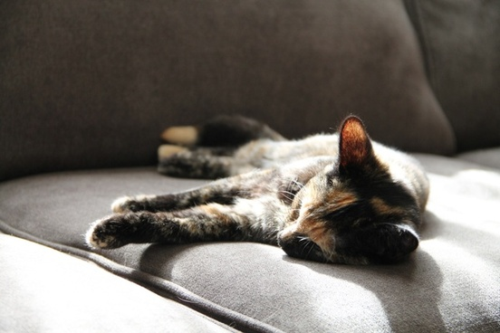 cat sleeping on couch in the sun