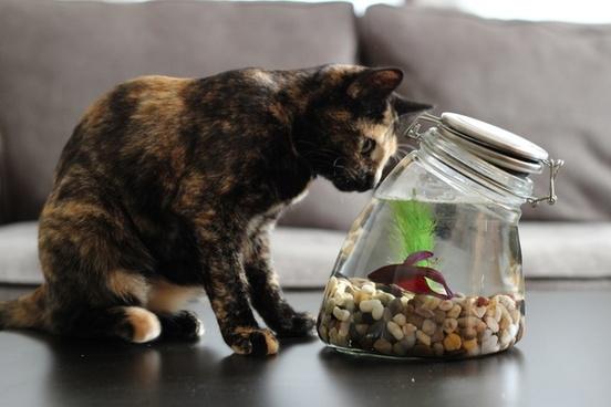 cat staring at fish in jar