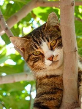 cat sweet climb