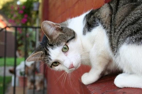 cat wall pets