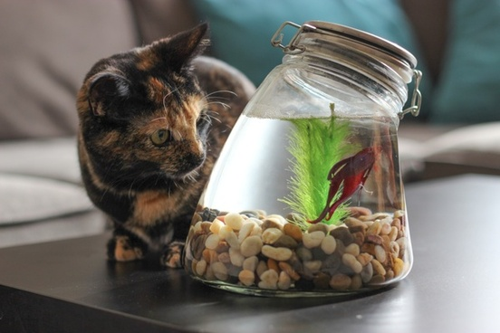 cat watching fish in jar