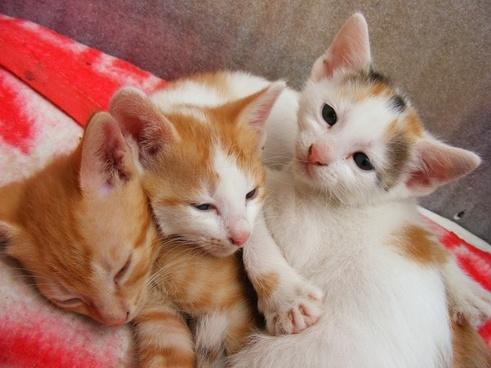 cats cute kitten
